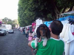 Street festival inspection